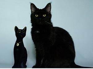 fotky docela černé kočičky video náhodného análního sexu